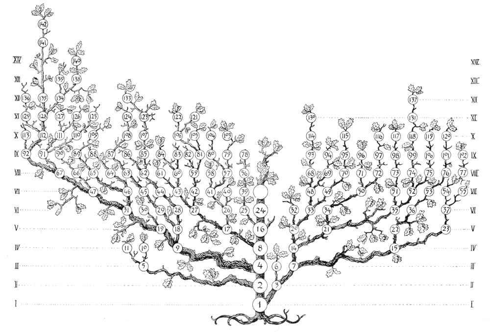 Stambaum1_kleiner